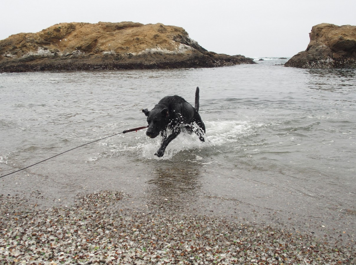 Opie's always thrilled when we find a beach where he can play fetch.