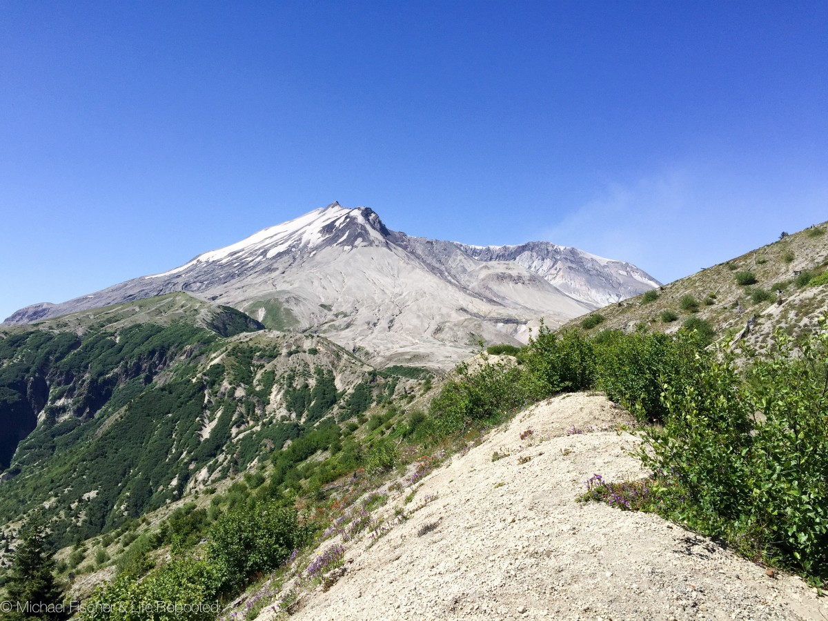 Mount St. Helens re-enters our view, closer and clearer, after our first mile on the trail