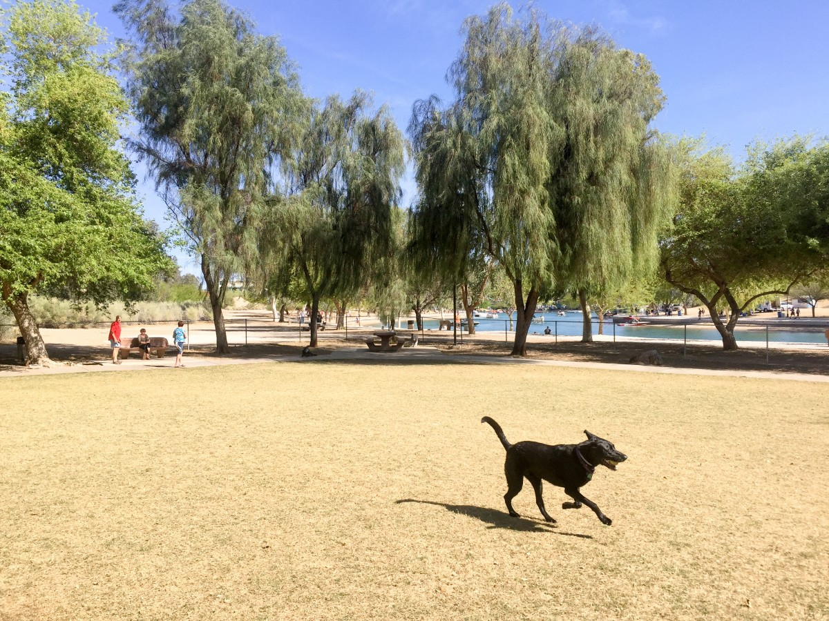 Opie loves having a nice big dog park just 30 feet from the channel