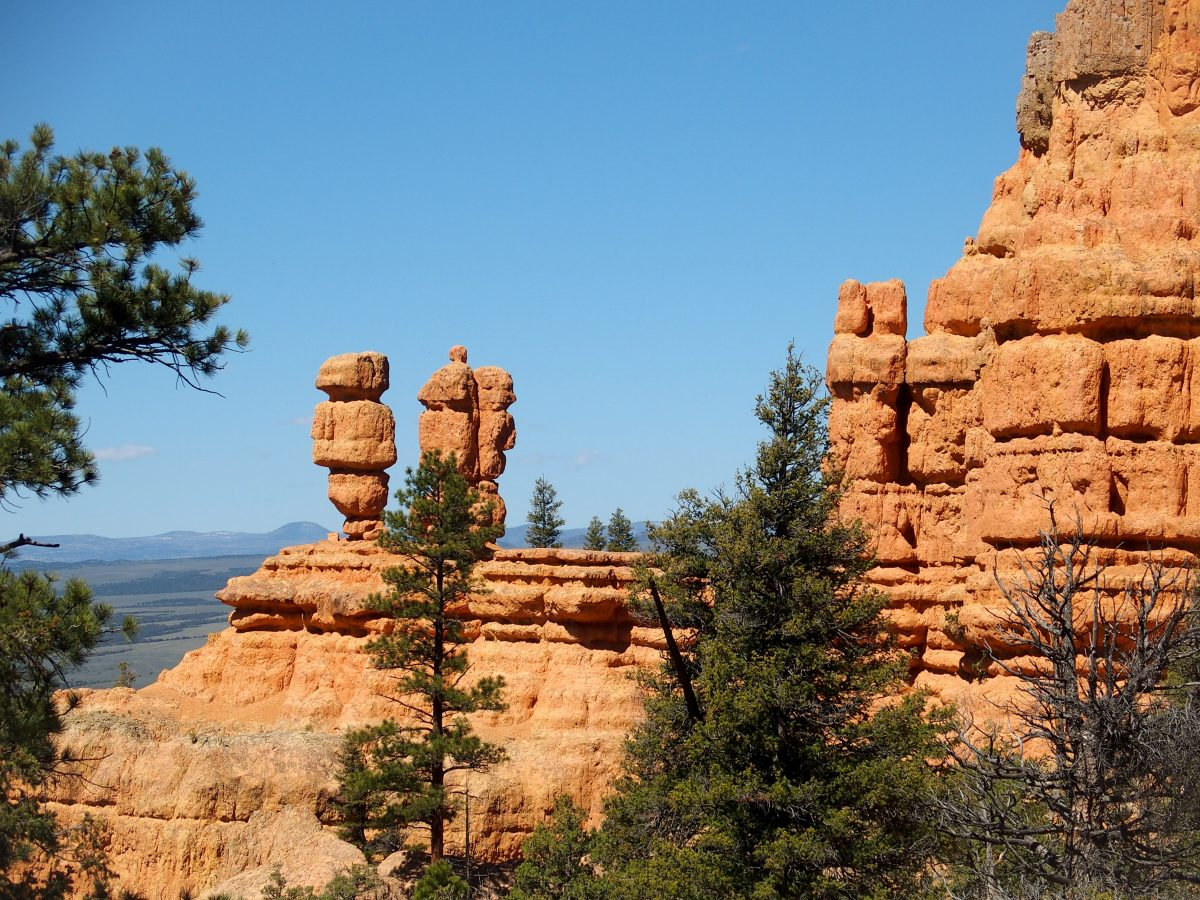 Some of the Hoodoos in Red Canyon.
